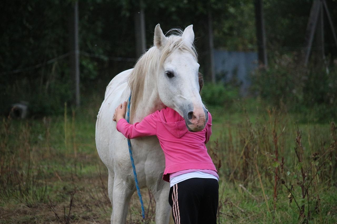 horse-958320_1280.jpg