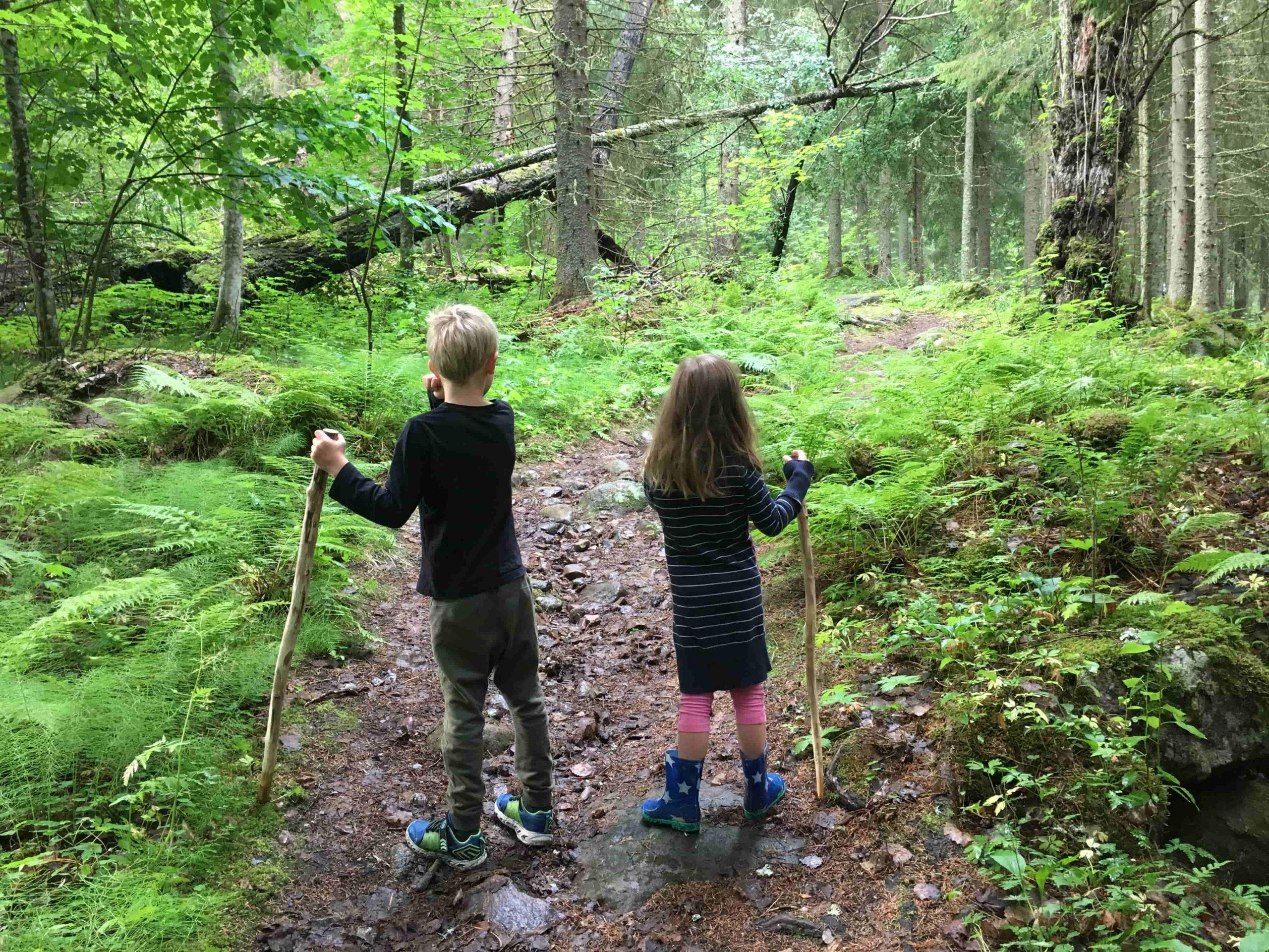 woods_full-scaled.jpeg
